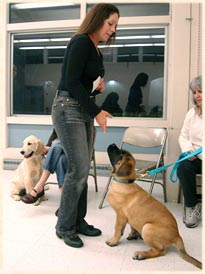 Laura working with a German Shepherd.