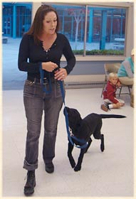 Laura teaching a dog to walk on leash.